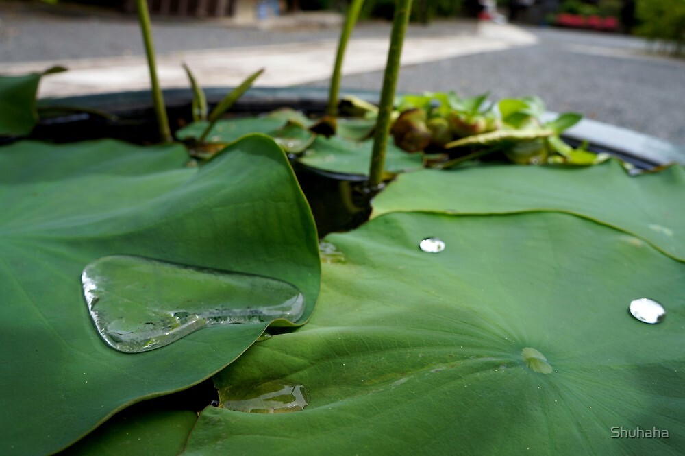 Water on a leaf Zen by Shuhaha