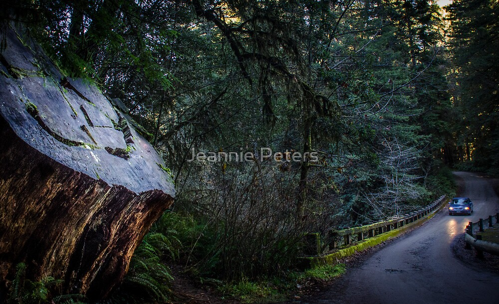 a drive through the redwoods by Jeannie Peters