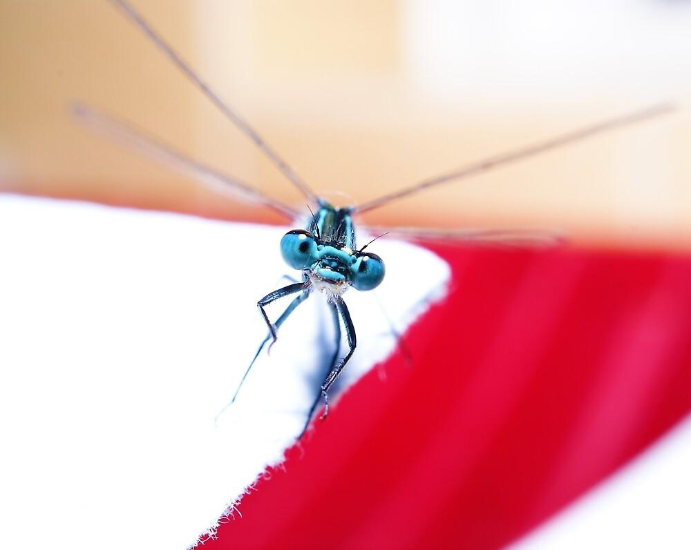 May fly by StuartSiviter