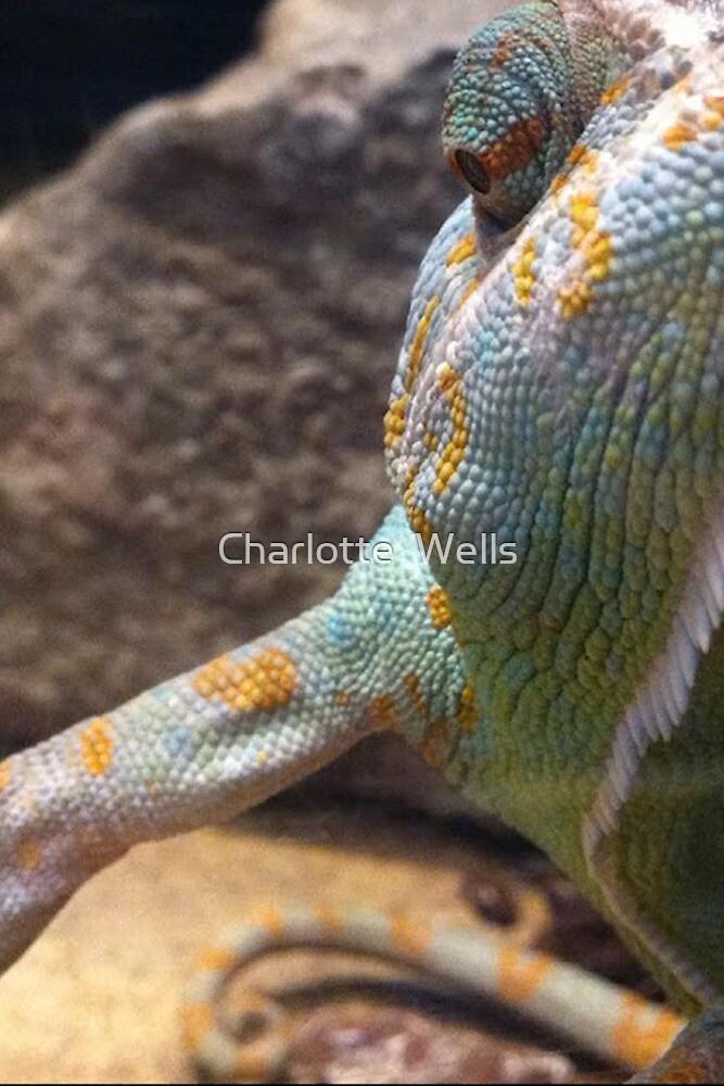 Chameleon  by Charlotte  Wells