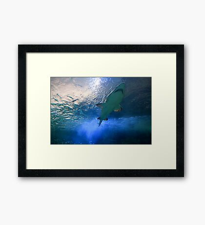 The Monarch Framed Print