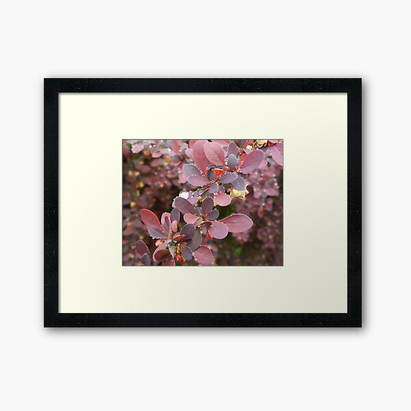Pearls - Raindrops on Bayberry Framed Art Print