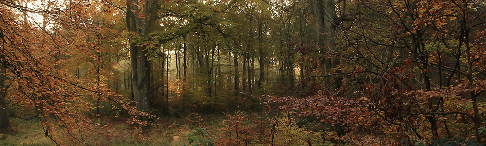 The Magic Of Autumn by Graham Ettridge