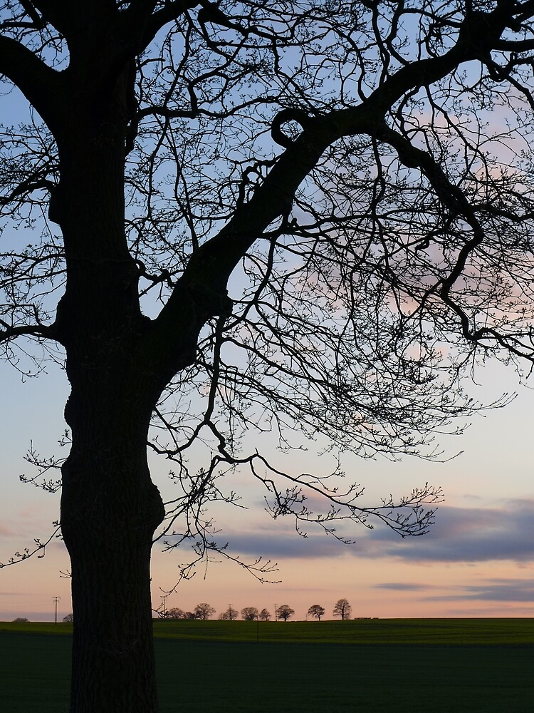 Evening over Ackworth fields by Anna Myerscough