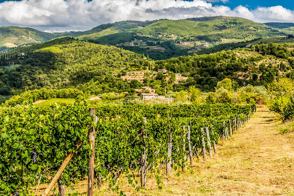 Tuscany's countryside by LacoHubaty
