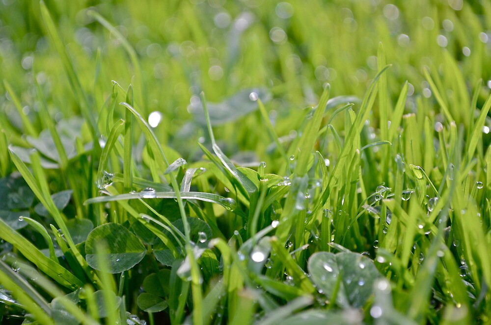 Wet Grass by Carag0nzales