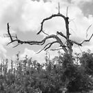 """Dead Tree"" by BlackDove1128"