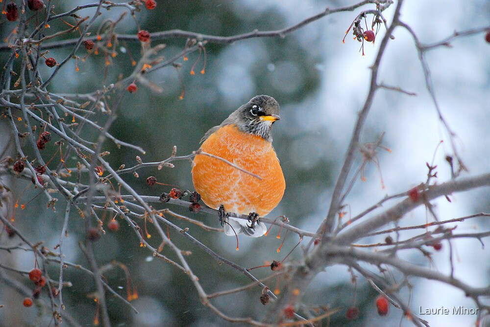 Robin in Winter #2 by Laurie Minor