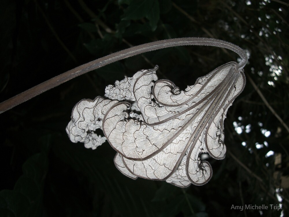 Aging by Amy Michelle Tripi