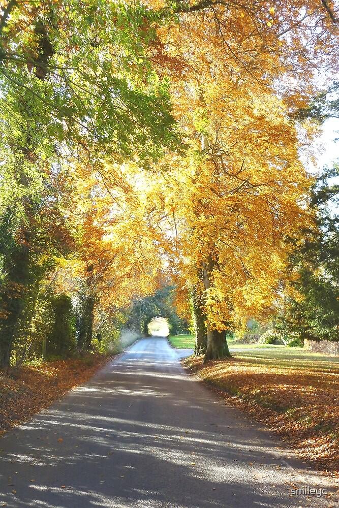 Autumn scene by smileyc
