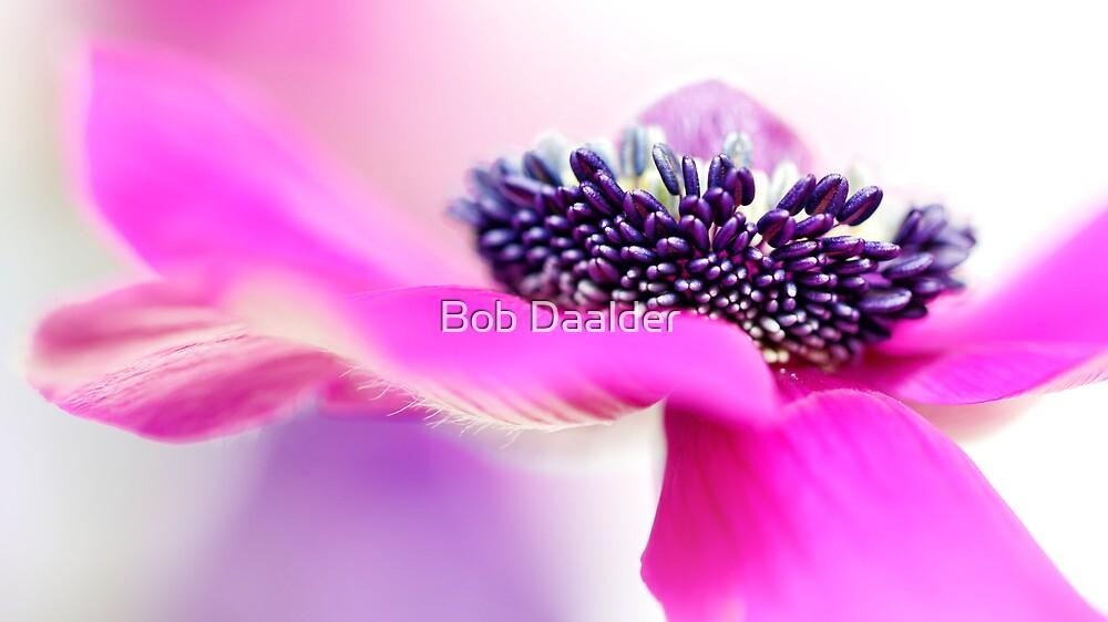 Pretty in Pink.... by Bob Daalder