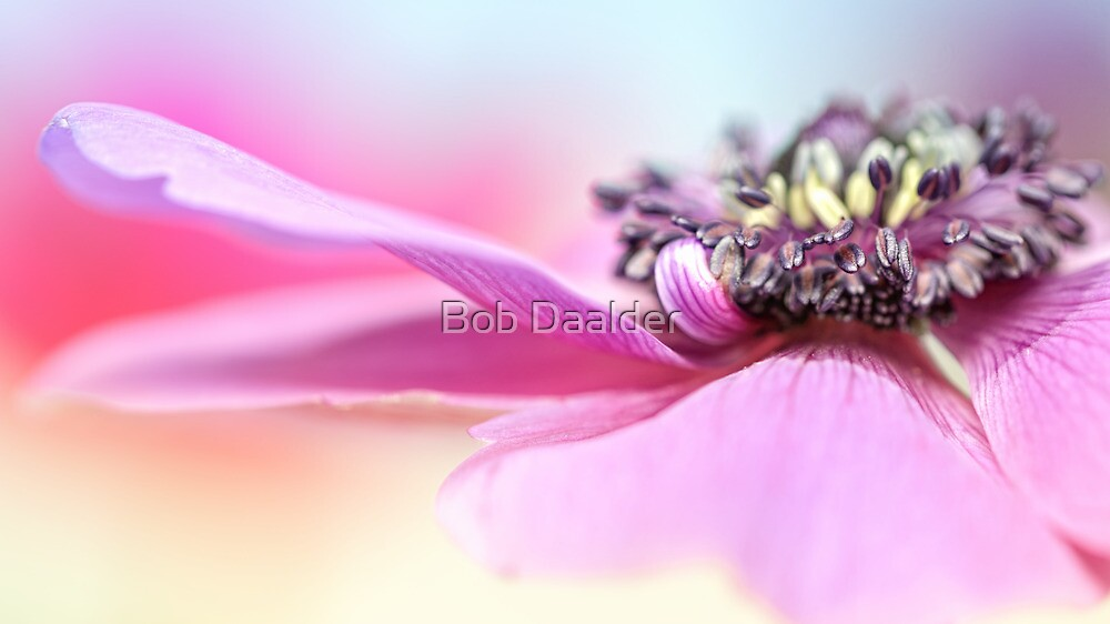 Will you marry me.... by Bob Daalder