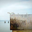 Birds on the wall by Sandra Pearson