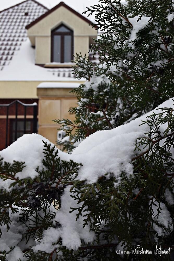 Winter frenzy by Oana-Mihaela Rizea