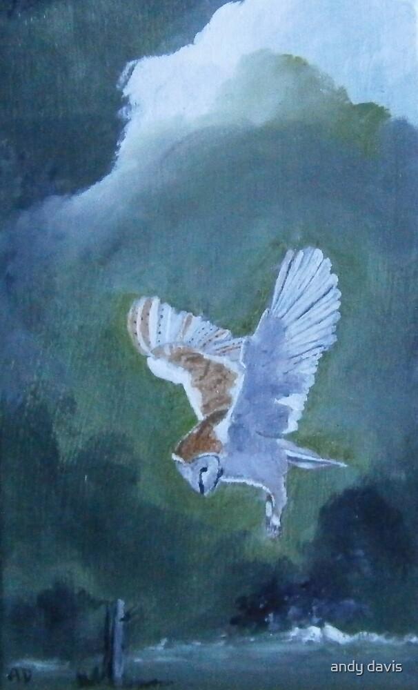 Barn Owl 2 by andy davis