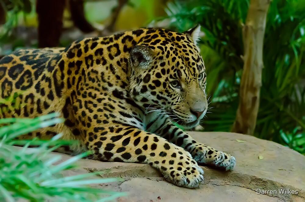 Jaguar by Darren Wilkes