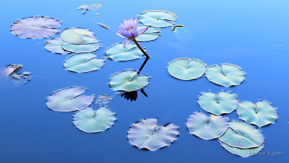 Water Lily - Tahitian Islands by Honor Kyne