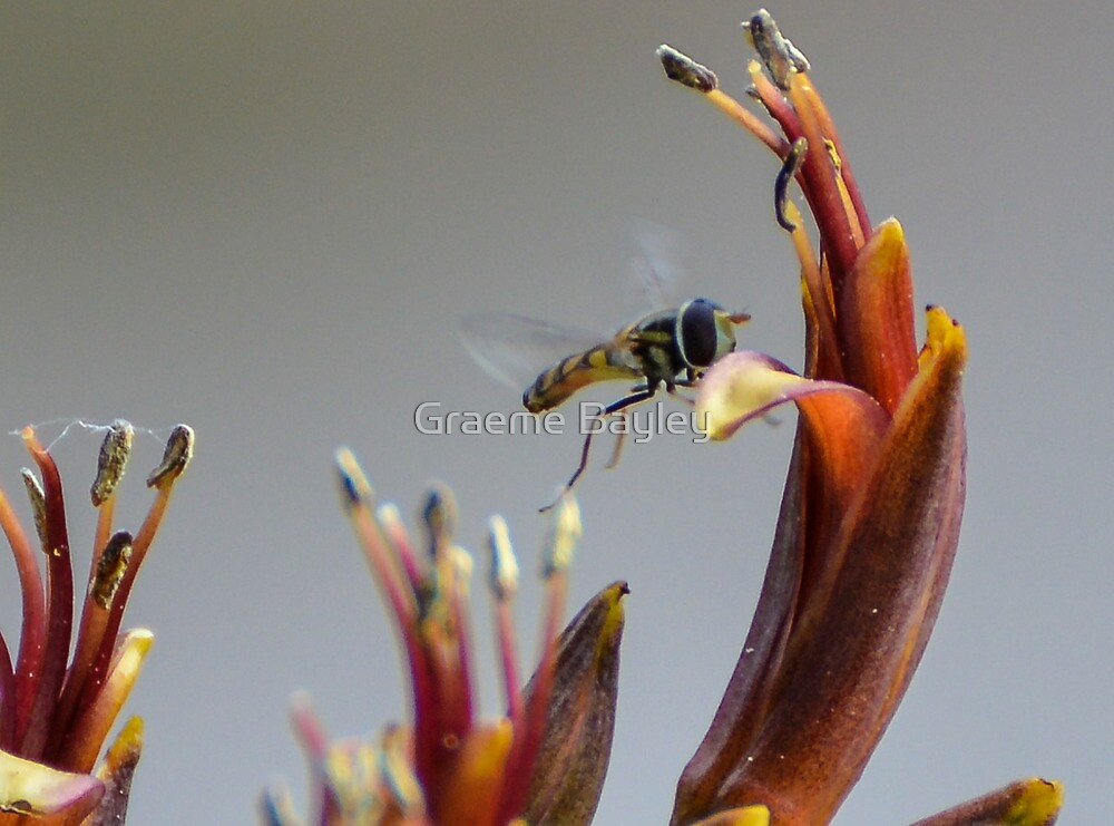 Insect in Flight by Graeme Bayley