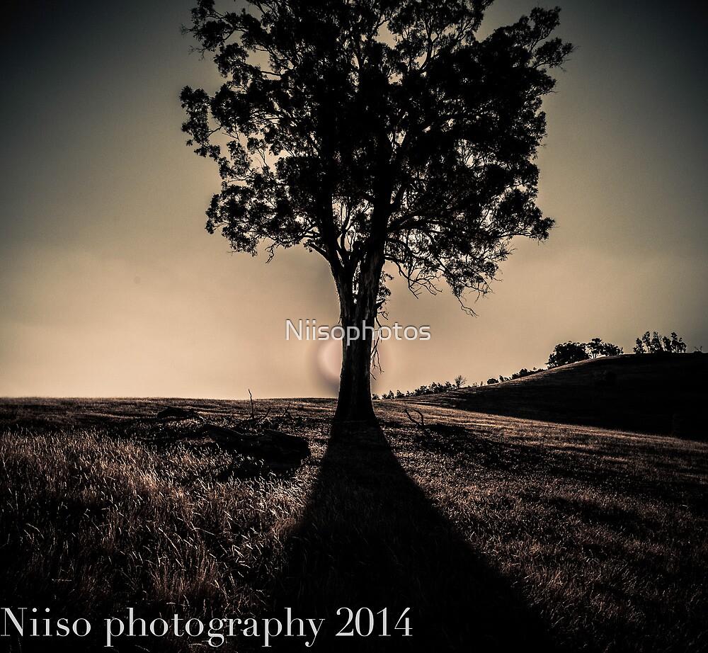 peeking  light by Niisophotos
