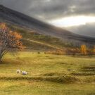 Autumn in Iceland by Peter Hammer