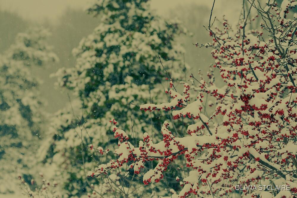 Winter Garden by OLIVIA JOY STCLAIRE