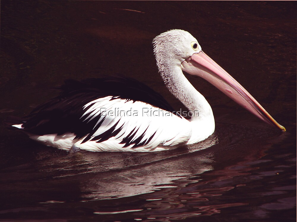 Pelican by Belinda Richardson