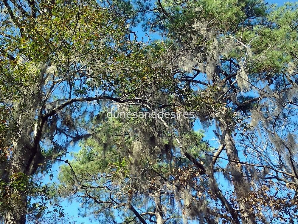 Spanish Moss by dunesanddesires