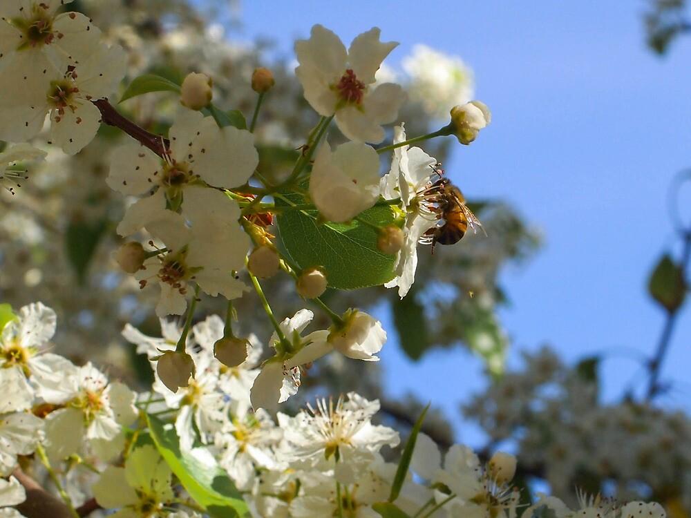 A Bee by Jenna Boettger Boring