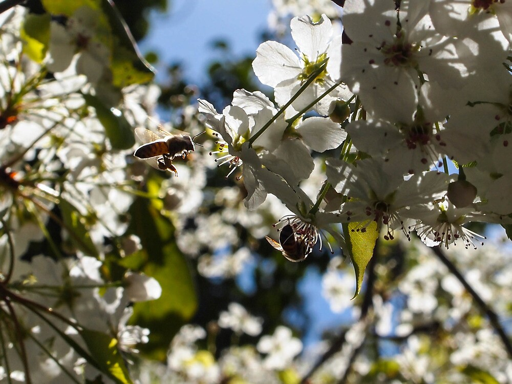 Today I saw some bees... by Jenna Boettger Boring