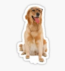 Dog with glasses Sticker