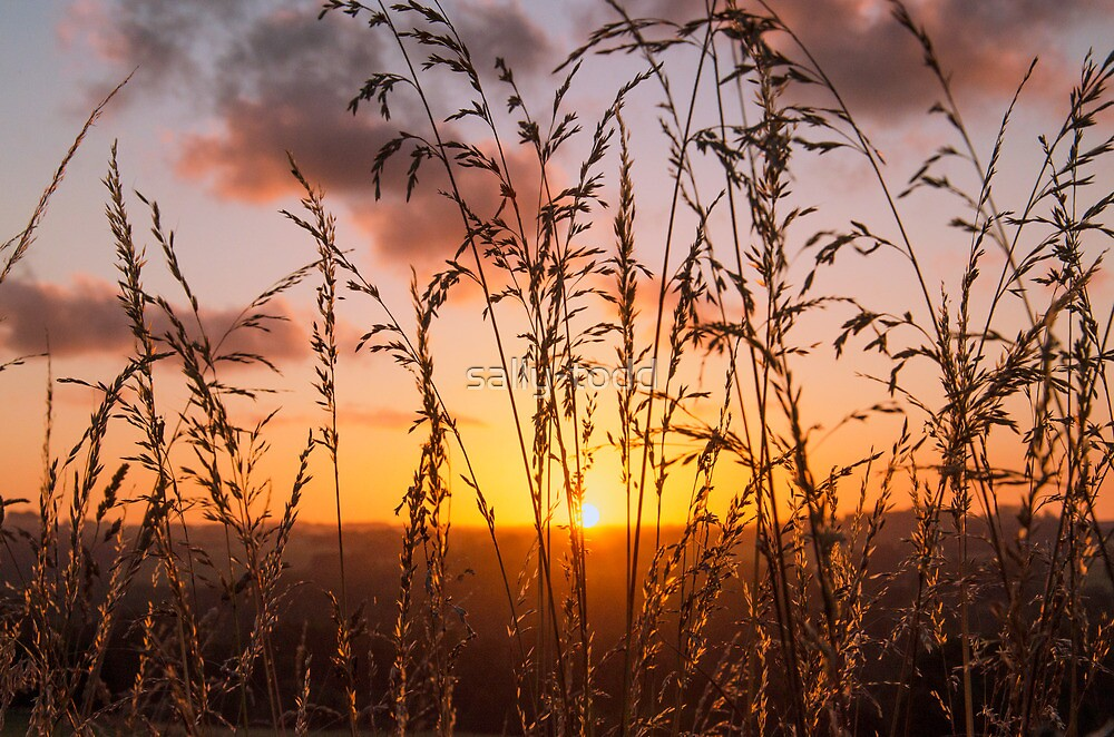 Sunset Through the Grass  by sally-todd