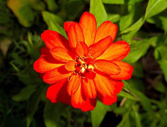 Estes Orange by Robert Meyers-Lussier