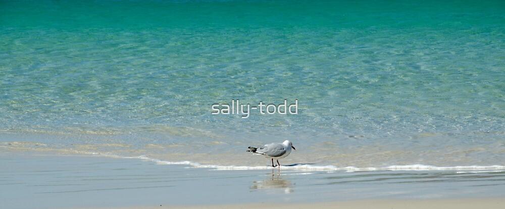 Seagull : Boat Harbour Beach, Tasmania Australia by sally-todd