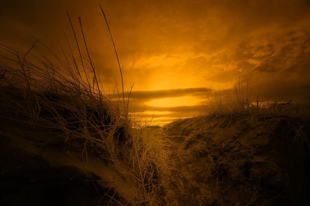 MORNING GLORY by leonie7