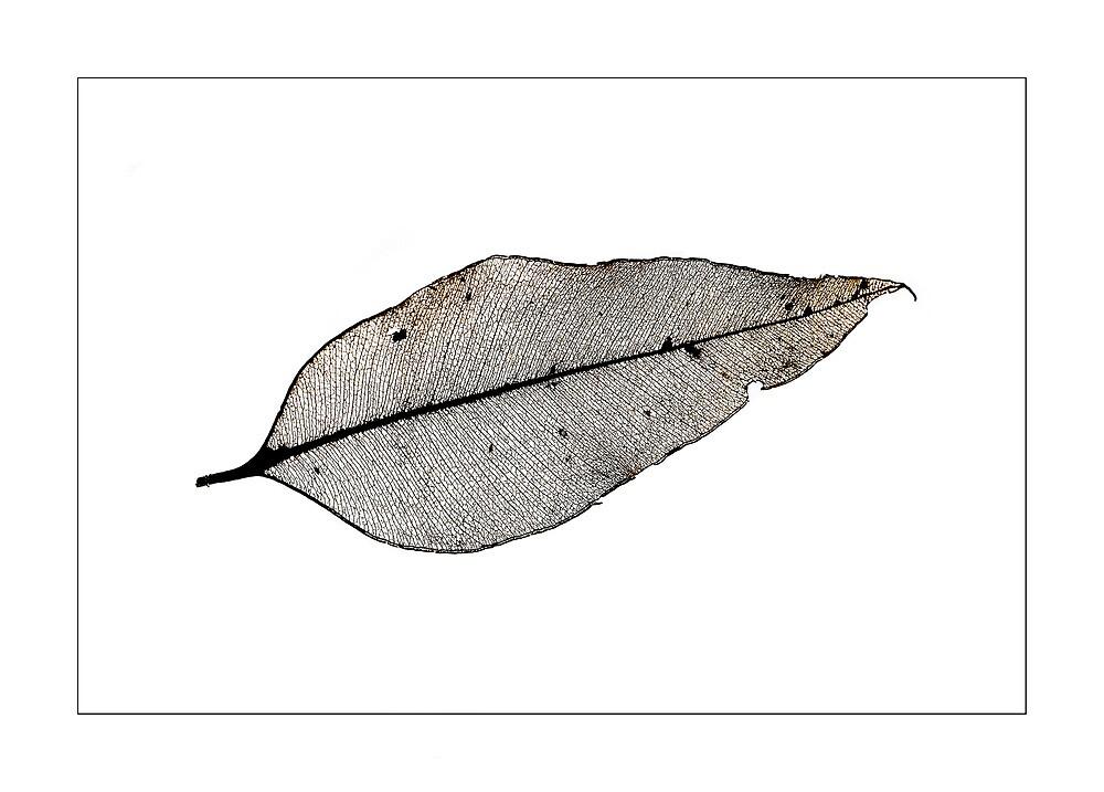 Skeleton leaf by dgugeri