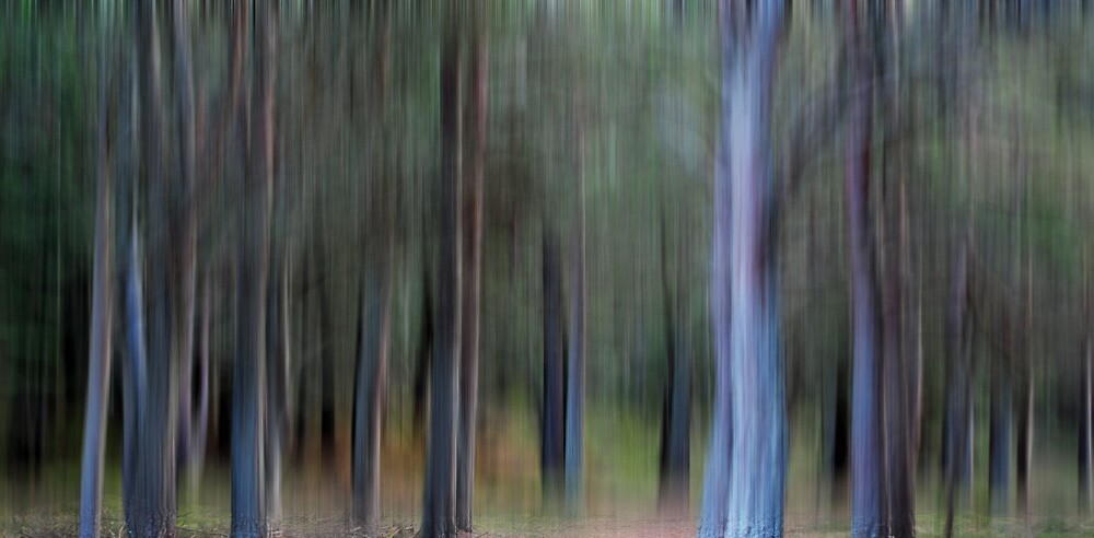 Smudged Pines by GreigMcIntosh
