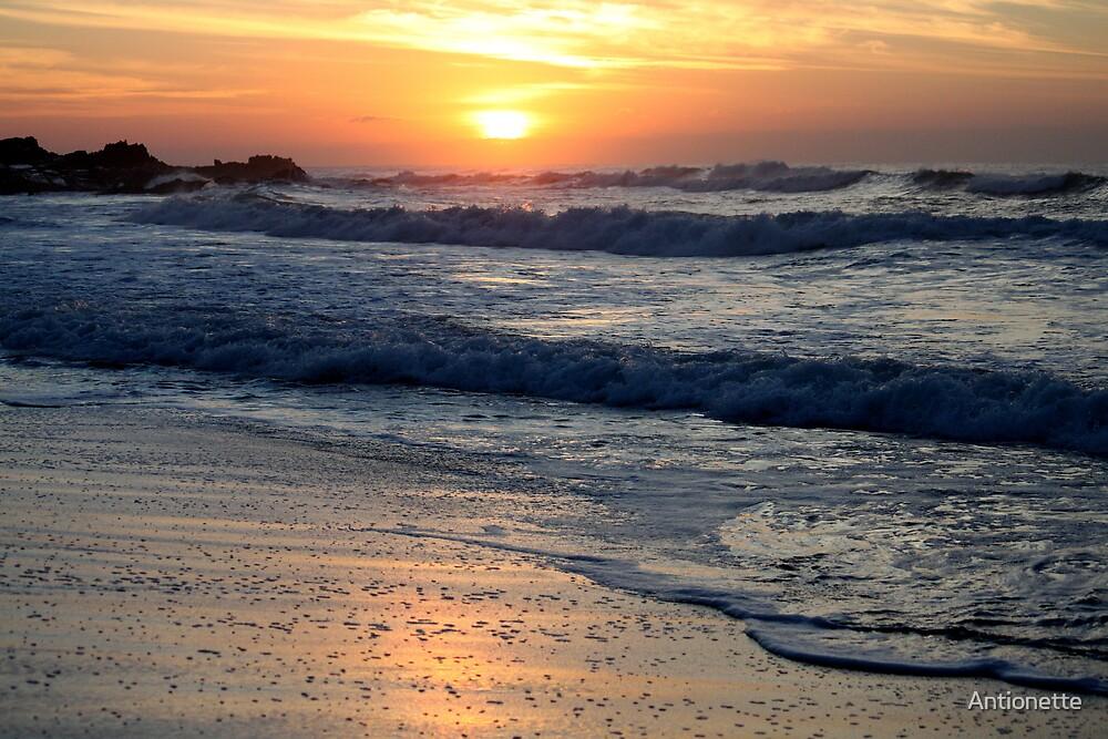 Golden dawn by Antionette