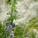 White Butterfly I by Belinda Richardson