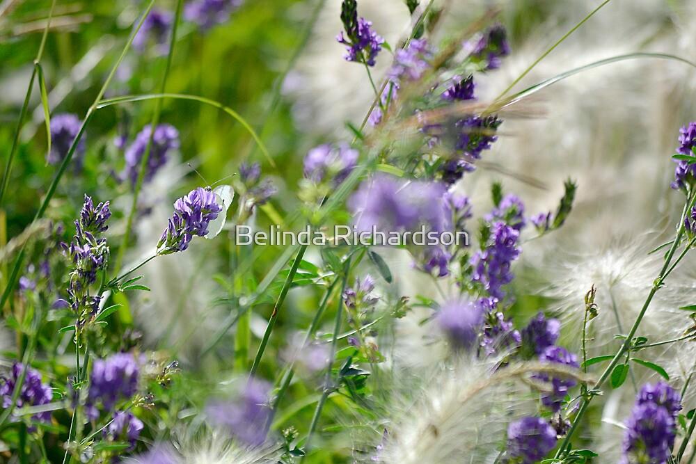 White Butterfly IV by Belinda Richardson