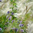 White Butterfly III by Belinda Richardson