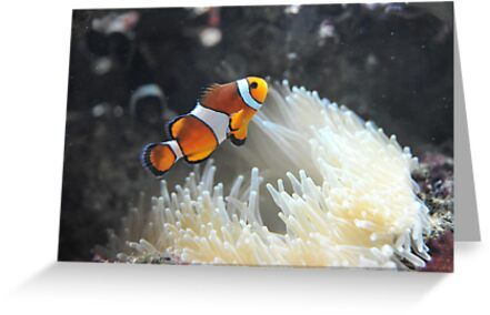 clownfish by EmmaGRP