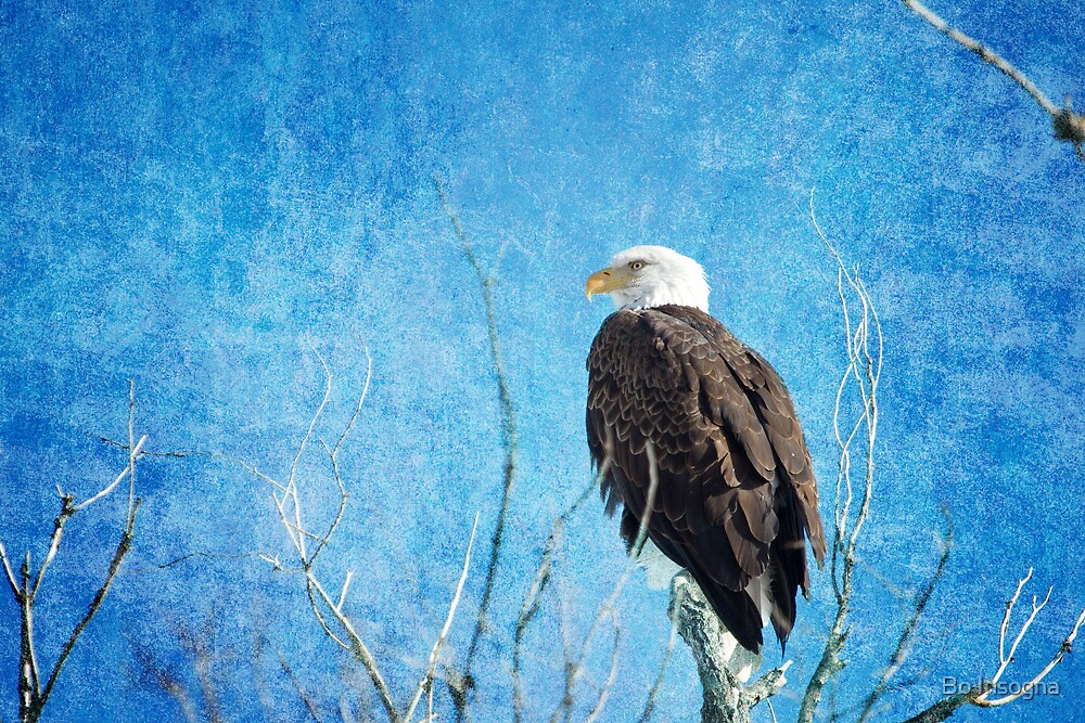 Bald Eagle Blues by Bo Insogna