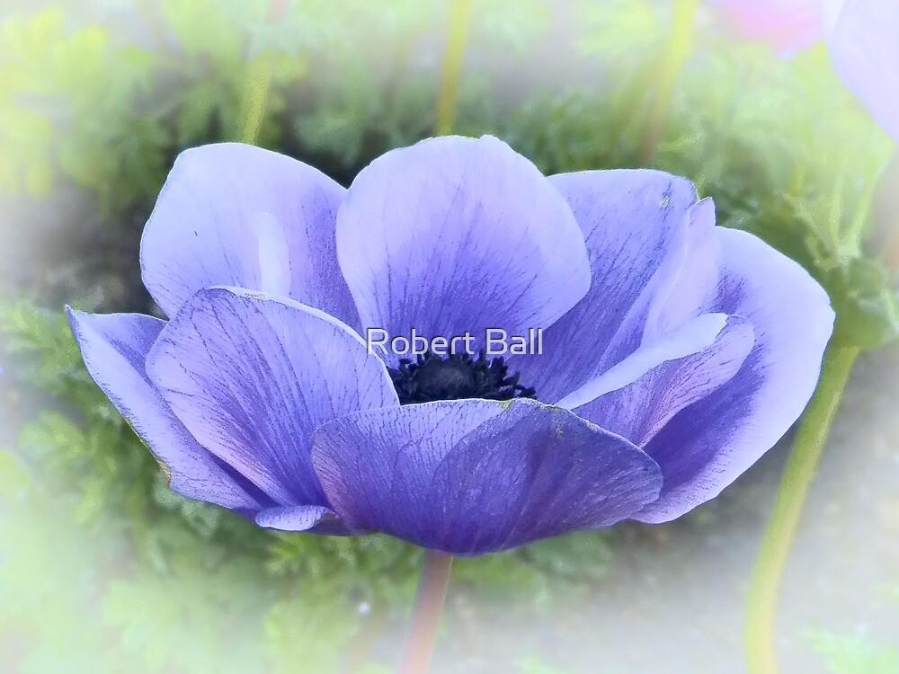 Purple Poppy by Robert Ball