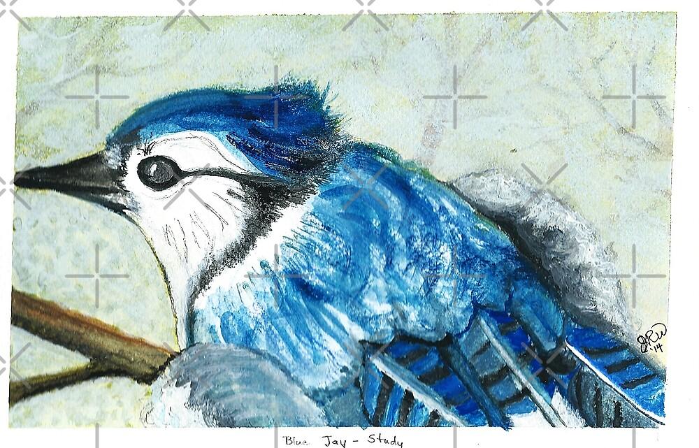Blue Jay by JRobinWhitley