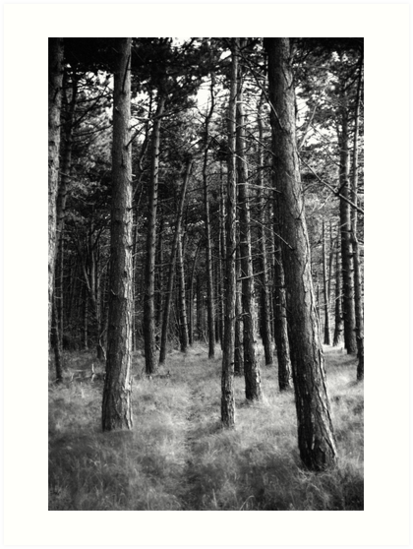Woodland by ictor