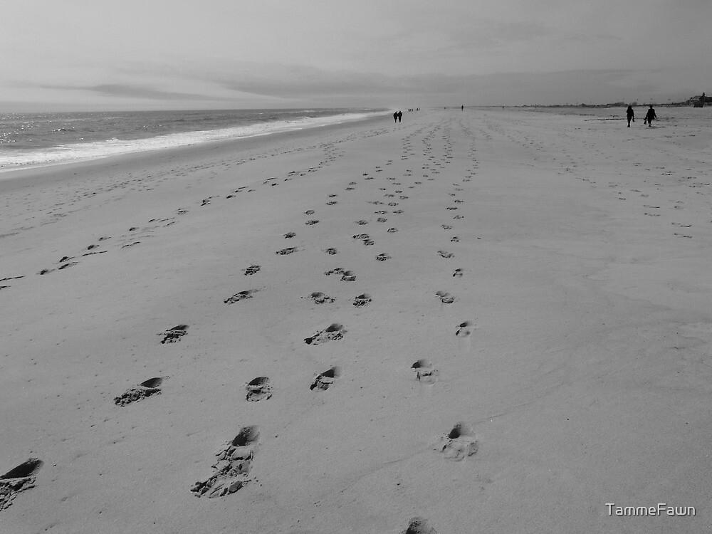 Beach Walk by TammeFawn