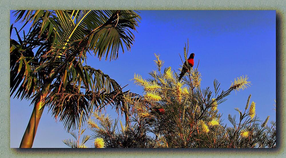 Birds Eye View by john NORRIS
