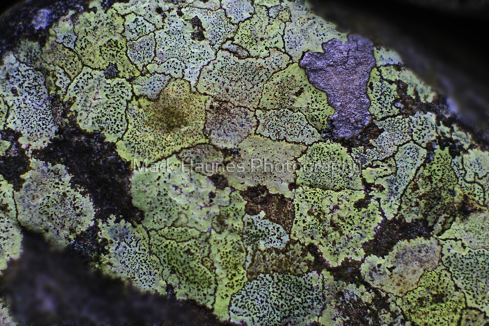 Lichen Map by Mark Haynes Photography