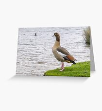 Goose looking at kale Greeting Card