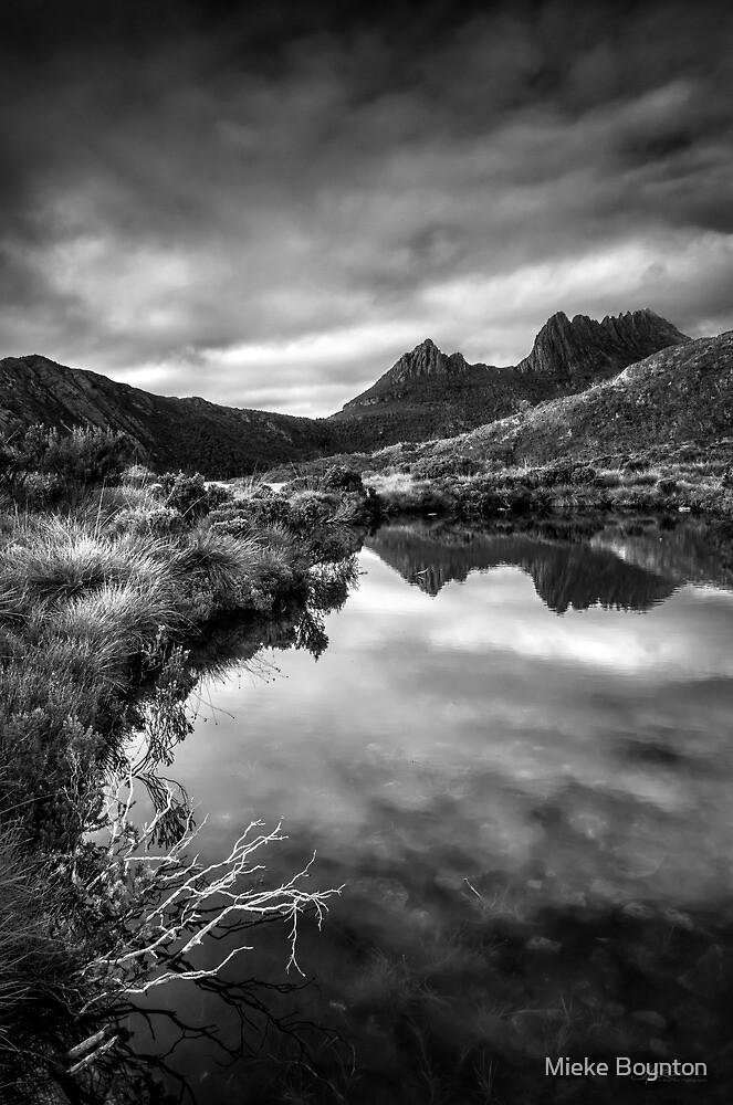 Dawn Reflections by Mieke Boynton